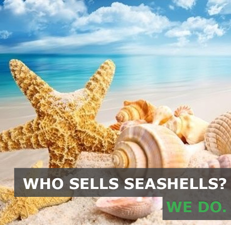seashells for sale decorative seashells marine life